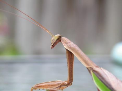 stockvault-alien-like-insect97185