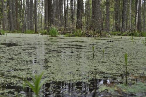 stockvault-forest-bog123987