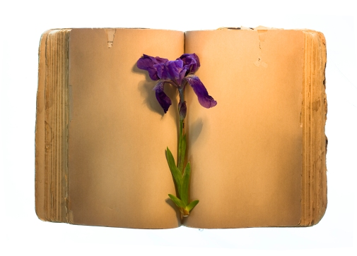 Old book and flower isolated on white.