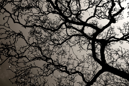stockvault-tree-branches-with-backlight130897.jpg