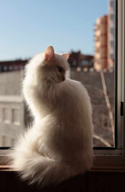stockvault-cat122222